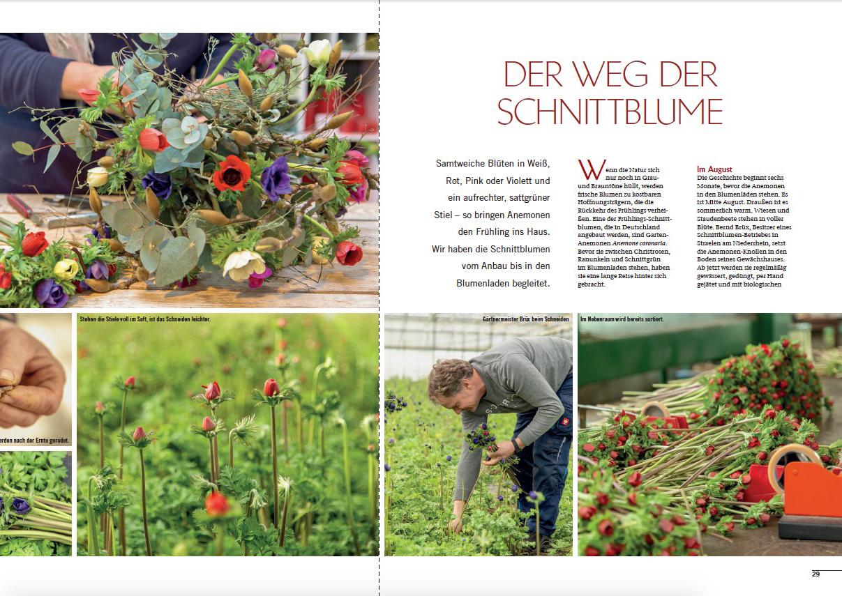 Artikel Landlust Schnittblumen